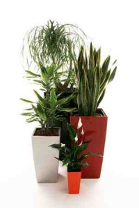 Hydro planten